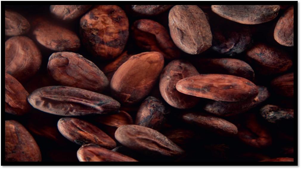 Programme des Rallyes du Chocolat 2020
